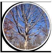 tree-appraisal