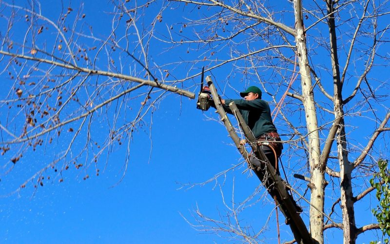 Get It Right! Tree Topping Versus Crown Reduction