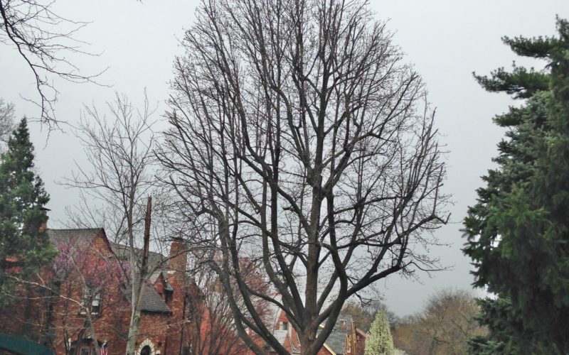 Get Your Trees Inspected This Spring!