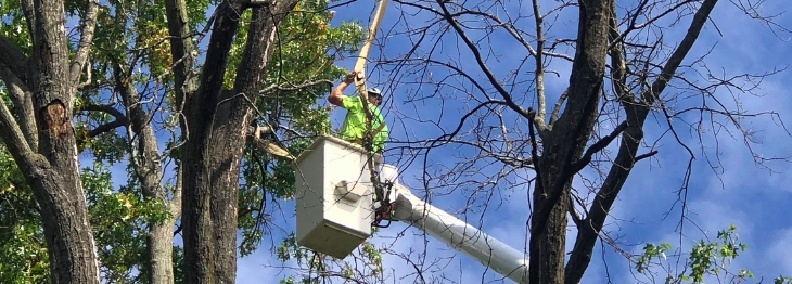 Hansens Tree Service Large Tree Removal St Charles and St Louis Missouri