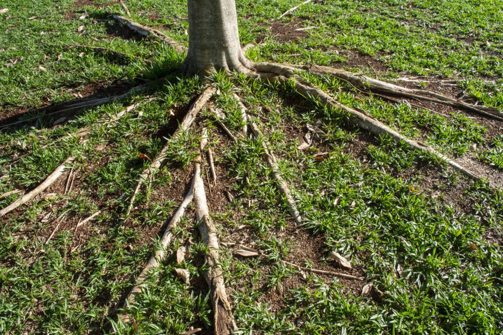 managing root diseases